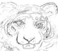 Tiger Bildvorlage