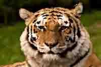 Tierbilder Bildvorlagen Zum Ausmalen
