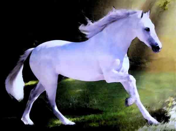Muster: Weißes Pferd auf der Weide. Mit stark verdünnten Acrylfarben ...