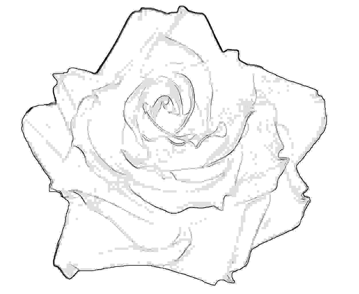 Blumenbilder Bildvorlagen Zur Kostenlosen Nutzung