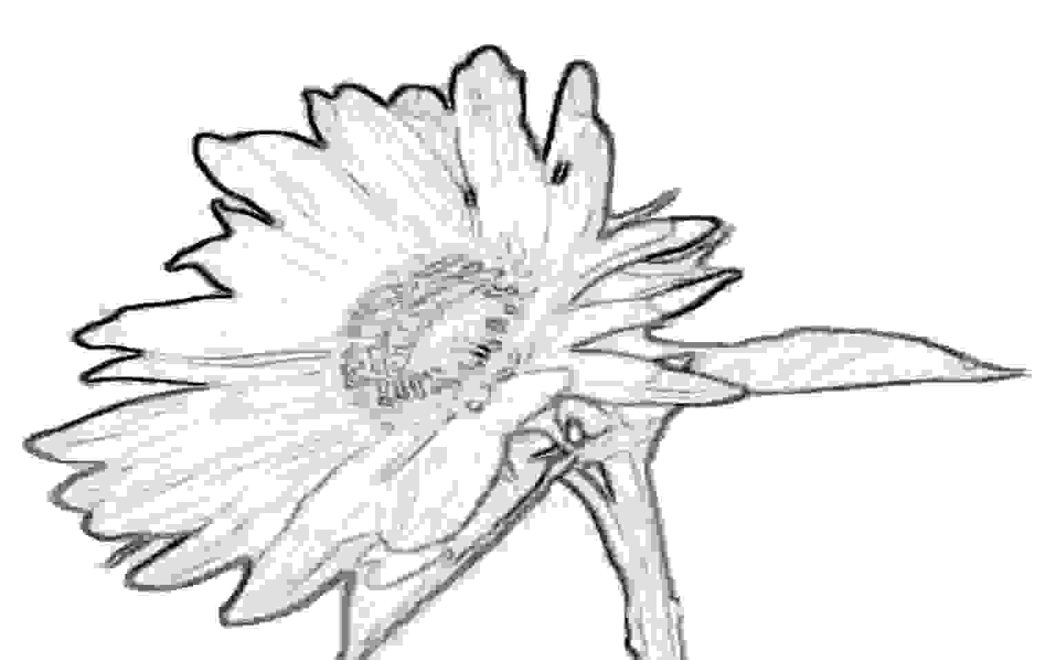 bildvorlage sonnenblume
