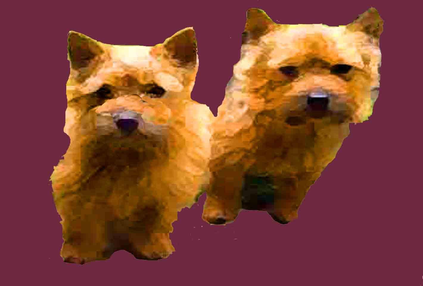 Bildvorlage Hunde Malen