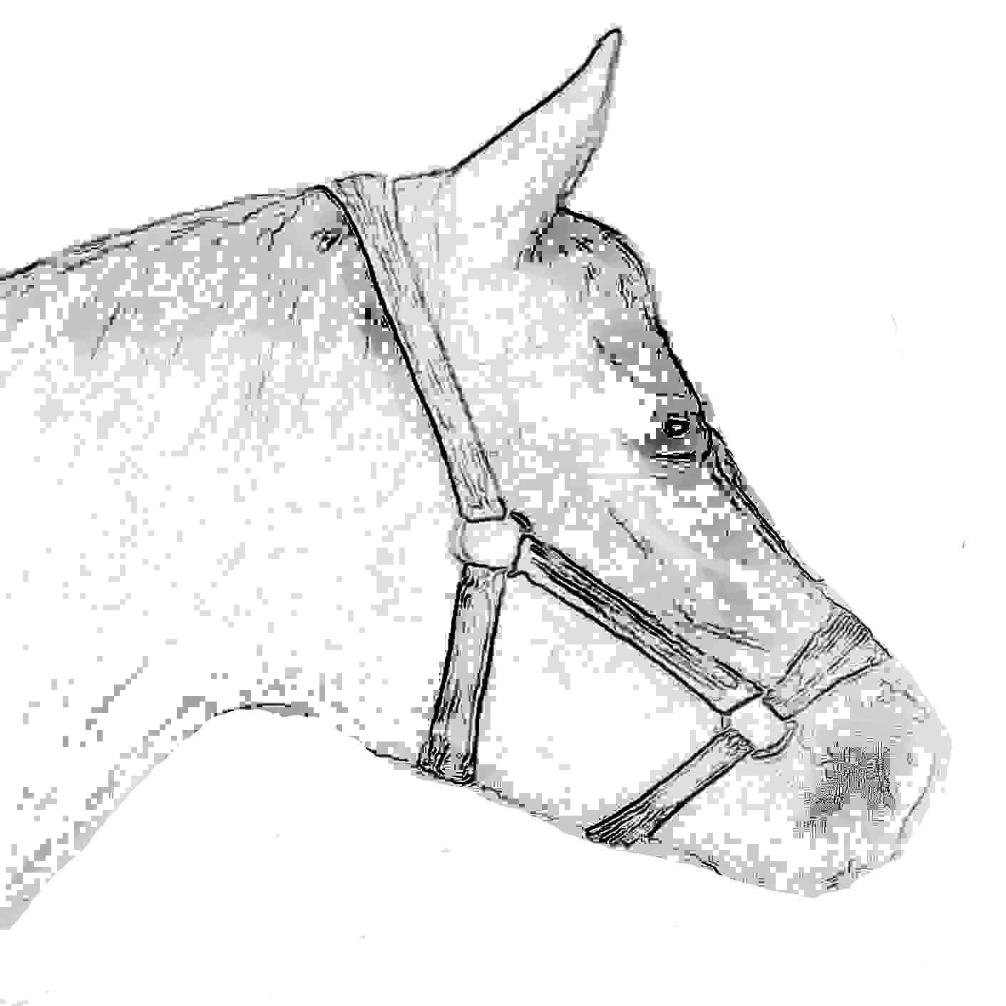 Pferdebild Totilas Ausmalen