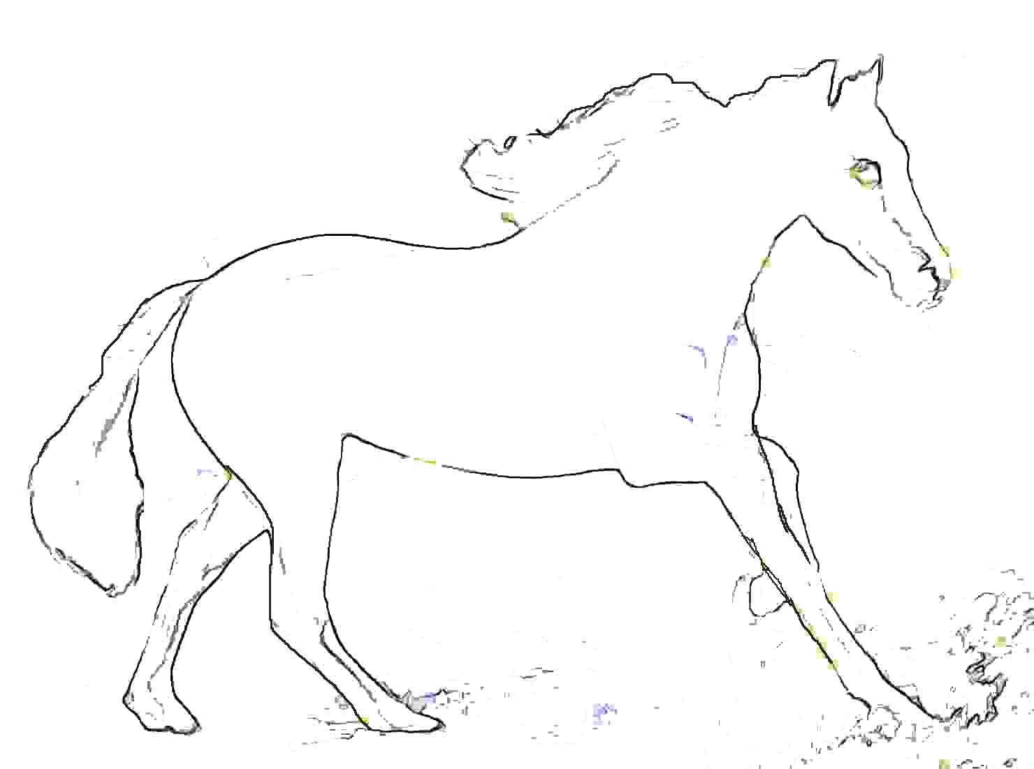 Schimmel - ein weißes Pferd zum ausmalen